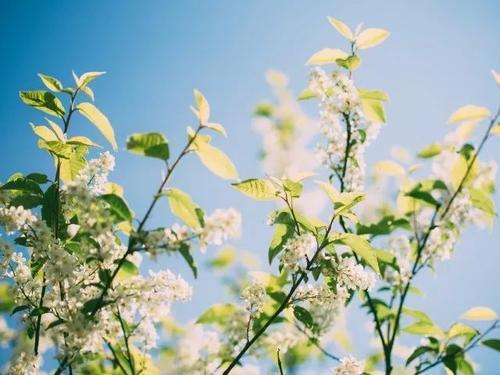 初夏,静赏一季花开