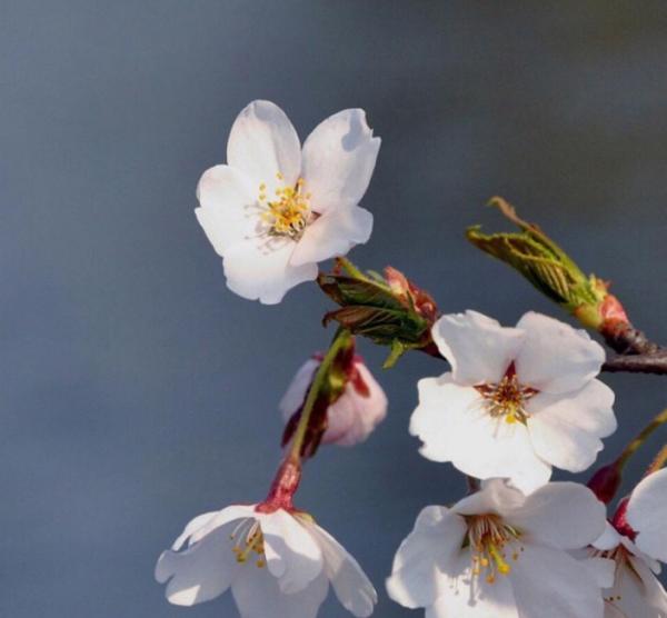 赞美春天的精美诗句100句