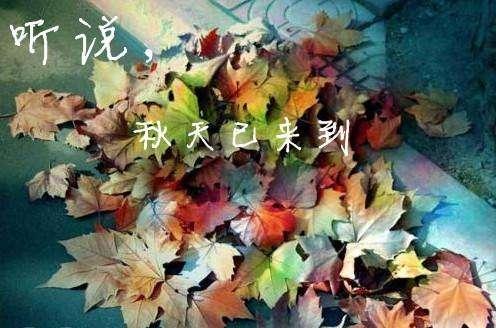 秋雨画春光