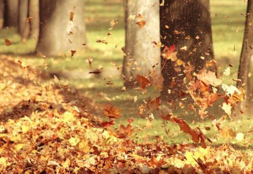 想你,是一场落叶的忧伤