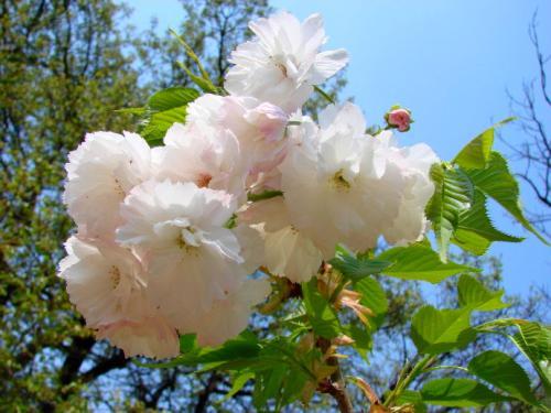 任世间沧桑变化,我只管灿烂如花
