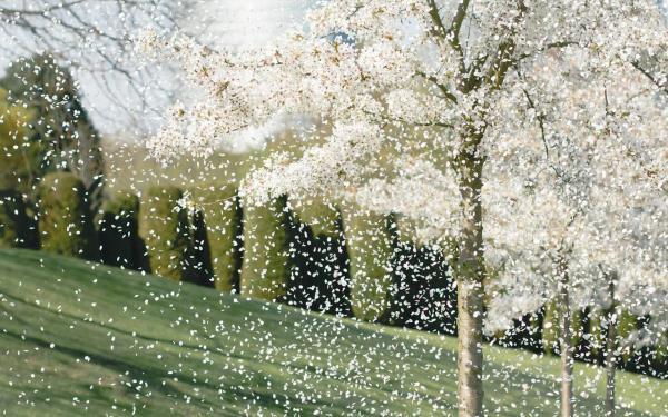 开花的树,都拥有枝桠
