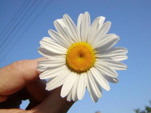 在一朵花里遇见