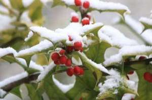 小雪 雪花开了,冬天醉了!