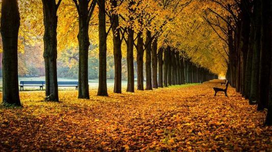 把明天的落叶留给明天去扫!